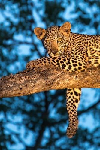 Güney Afrika'dan 'Vahşi' kareler