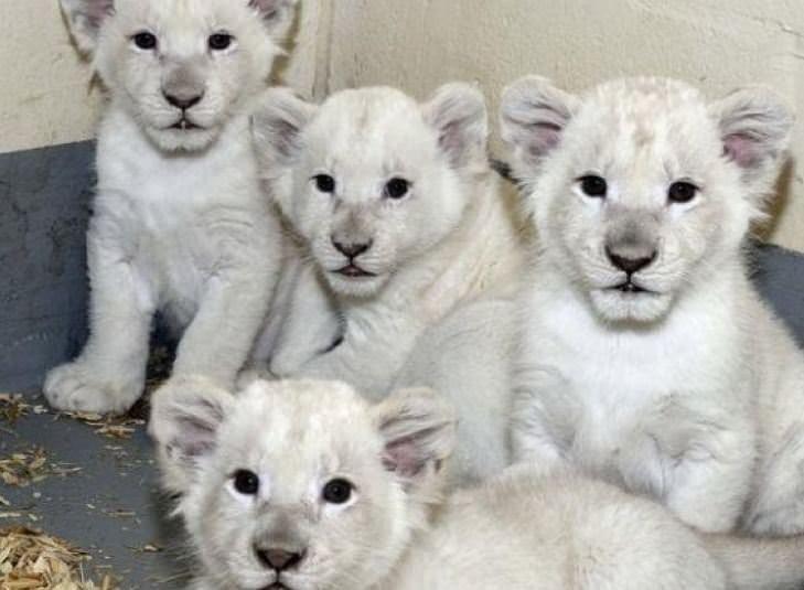 Dünyanın en pahalı hayvanları