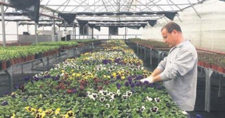 Gölbaşı yıl boyu çiçek üretiyor