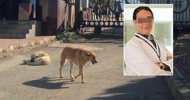 Profesör başıboş köpeği bıçakladı