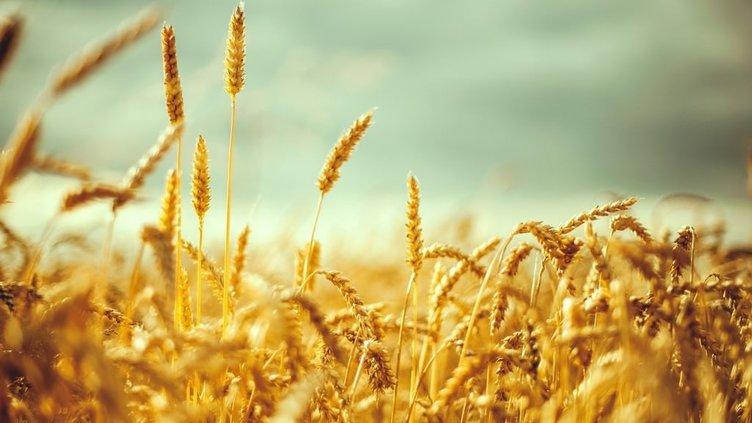 İşte devletin destekleyeceği tarım ürünleri