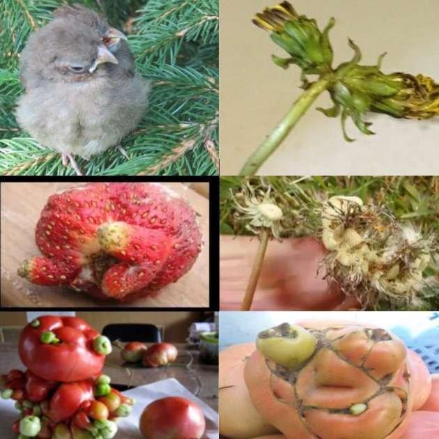 Mutasyona uğramış bitkiler