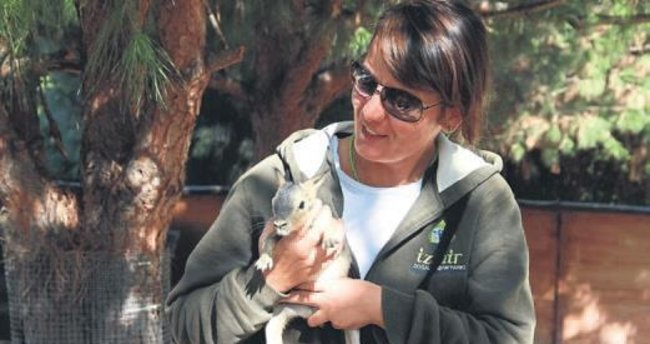 Sasalı'da mara yavrusu heyecanı