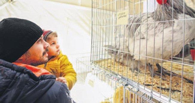 Horoz-tavuk çifti için müzayedede 3 bin 600 lira