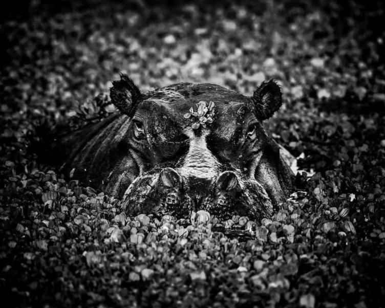 Afrika'ya Dair Büyüleyici Siyah Beyaz Vahşi Doğa Fotoğrafları