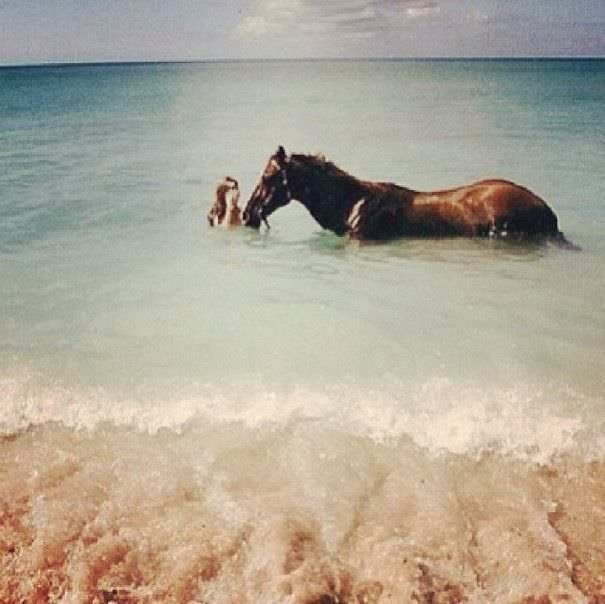 Atla birlikte yüzdü!