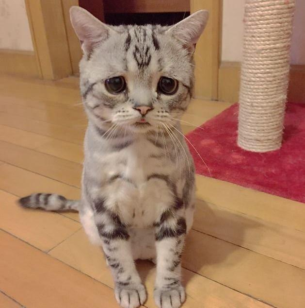 Dünyanın en hüzünlü kedisi