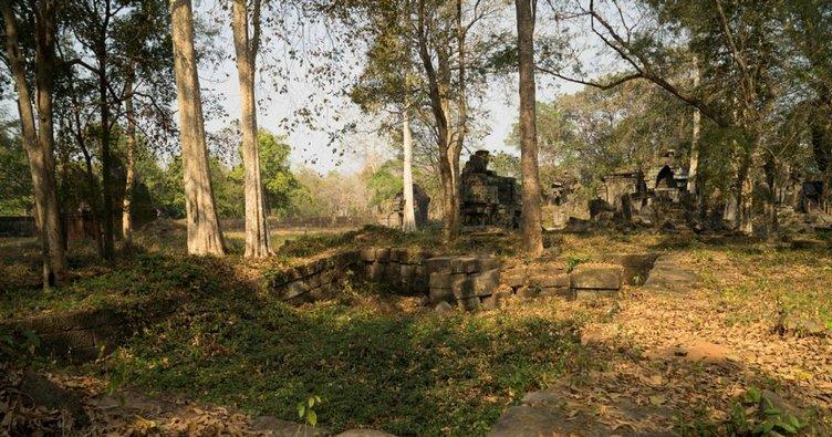 Kamboçya'da görülmemiş ağaç katliamı
