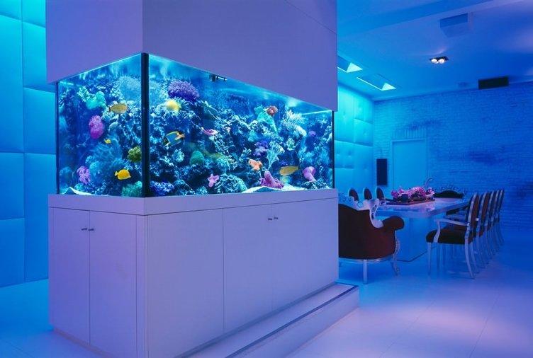 Balıkların renklendirdiği evler