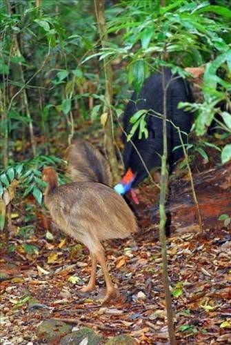 Bir tabur askeri öldüren kuş!