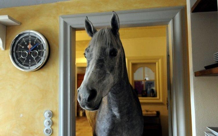 Atına evinde bakıyor