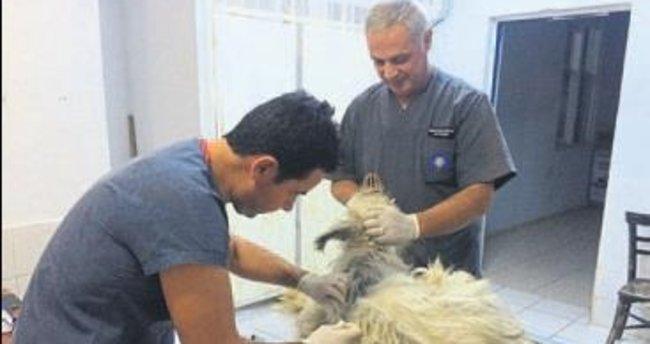 Çaresiz köpeklere Büyükşehir ilgisi