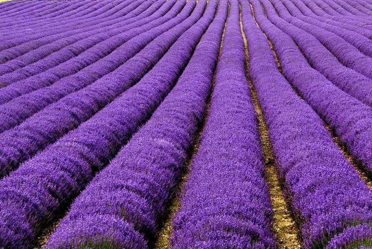 Doğanın Renklendirirken En Bonkör Davrandığı yerler