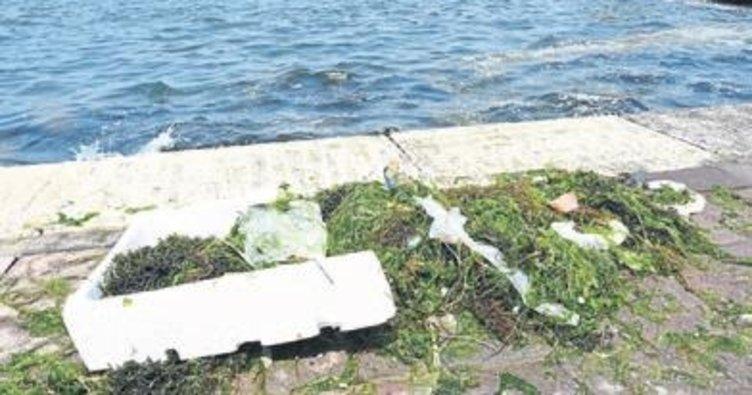 Denizdeki yosunlar balıkçıları zorluyor