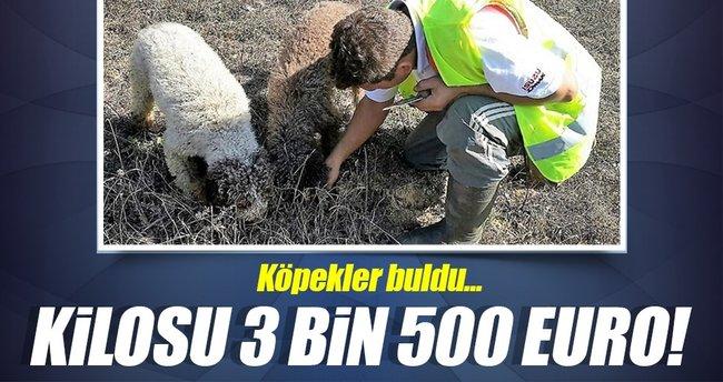 Bu mantarın kilosu 3 bin 500 euro