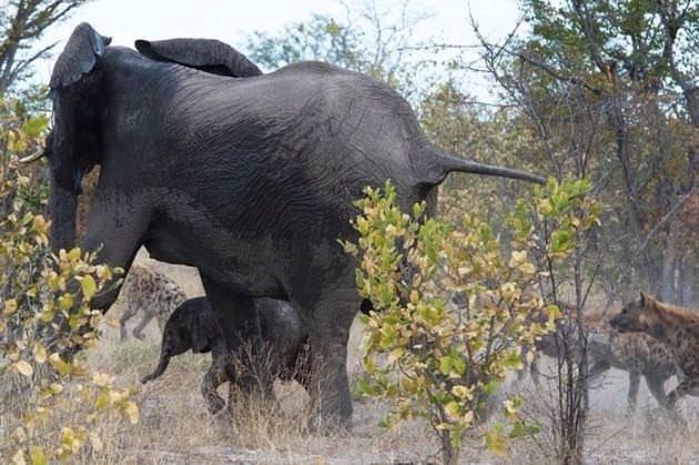 Anne filin müthiş mücadelesi
