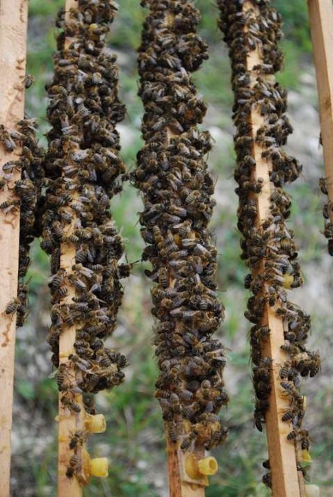Arı sütünün muhteşem faydaları