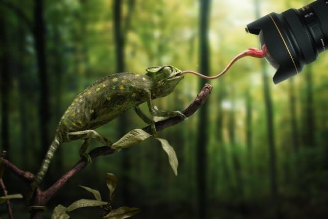 Hayvanlar hakkında şaşırtıcı bilgiler