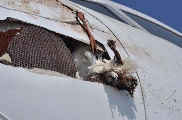 En garip uçak kazaları
