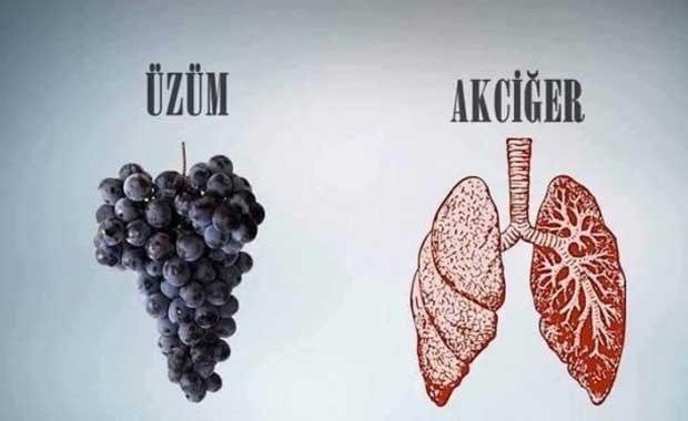 Hangi meyve hangi organa iyi geliyor?