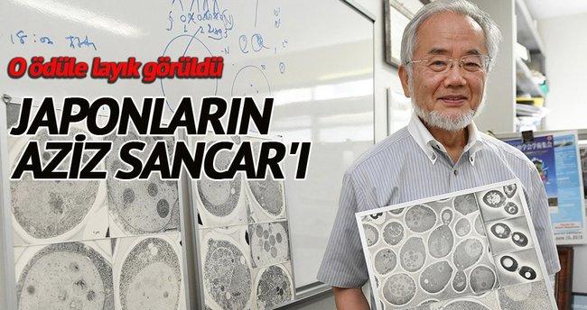 'Nobel Tıp' Japon hücre biyoloğuna