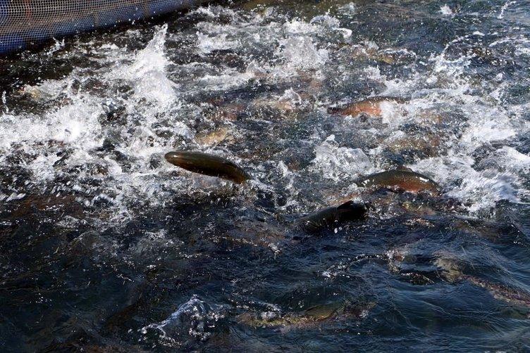 Denizi olmayan kentten 15 ülkeye balık ihracatı