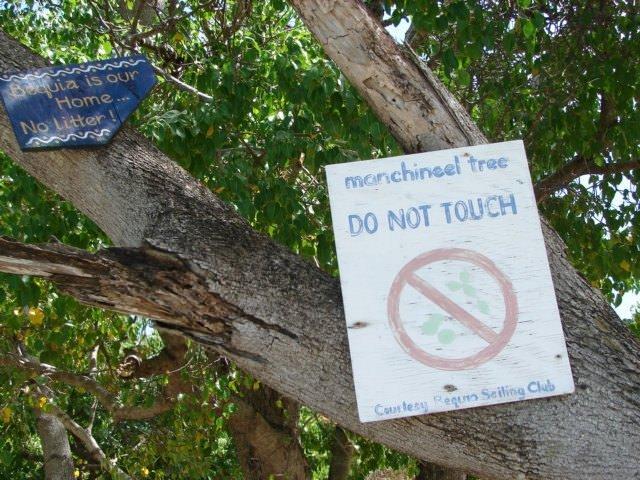 Bu ağaca sakın yaklaşmayın