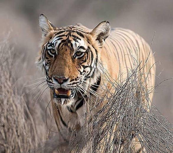 Dünyanın en güçlü çeneli hayvanları!
