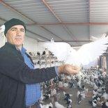 Güvercinlere haciz
