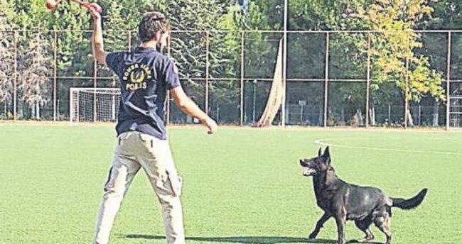 Bomba köpeği 'Gece' Türkiye birincisi seçildi