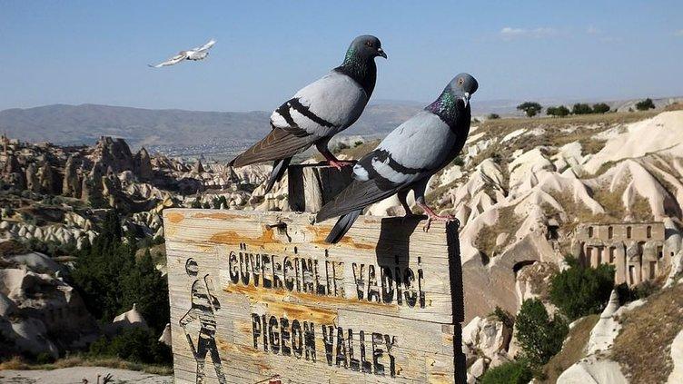 Turizm ve tarım için uçuyorlar