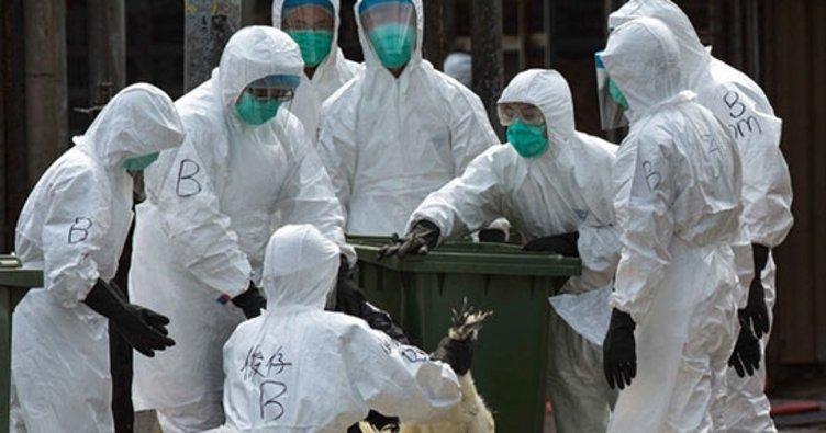 Çin'de kuş gribi alarmı