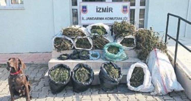 Beydağ'da 62.5 kilo esrar ele geçirildi