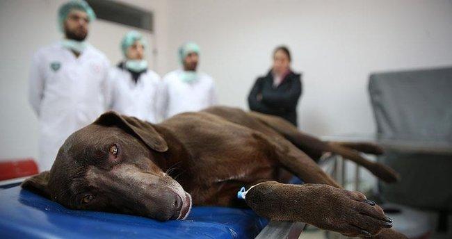 7 yaşındaki köpek başarılı bir ameliyatla kurtarıldı