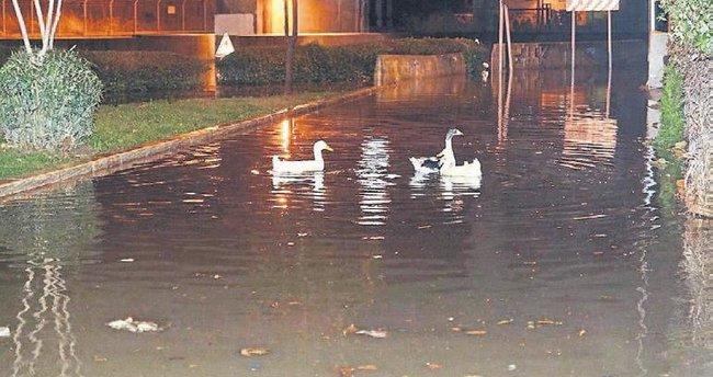 İzmir sokaklarında ördekler yüzüyor