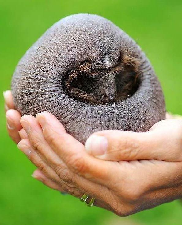 Tüysüz hayvanlar