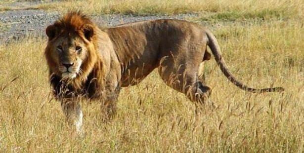 İnsanları en çok öldüren hayvanlar