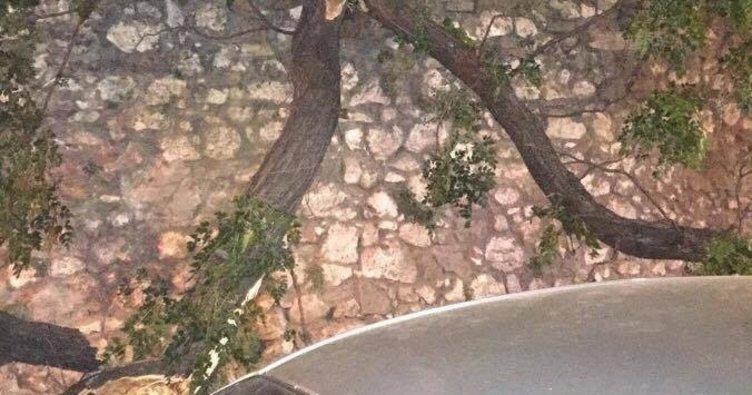 İzmir'de otomobilin üzerine ağaç devrildi