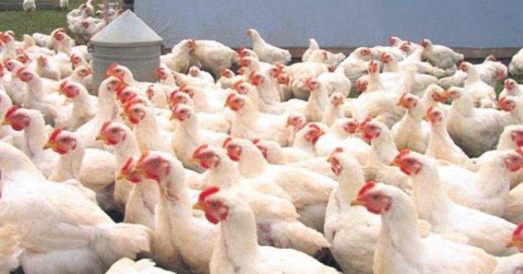 Piliç etine talep arttı ihracata mal kalmadı