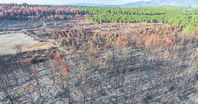 Orman yangının izleri siliniyor