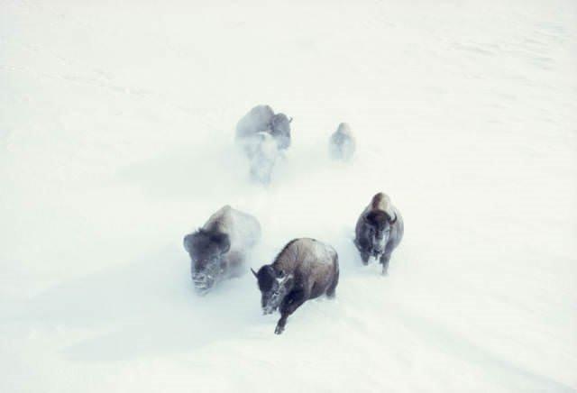 National Geographic'ten daha önce görülmemiş fotoğraflar