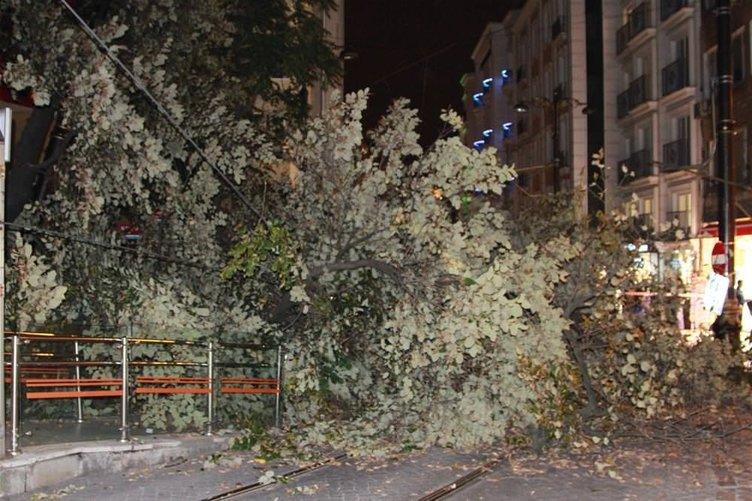 Tramvay yoluna ağaç devrildi