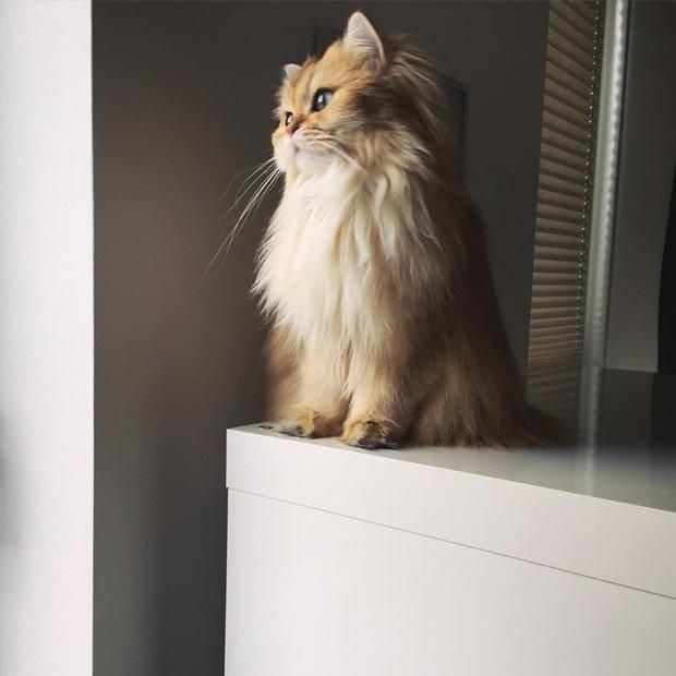 Fotojenik kedi