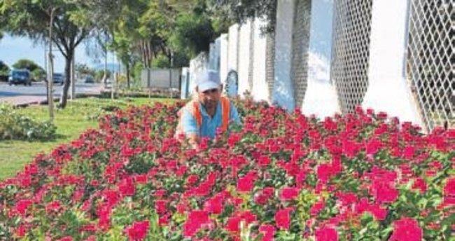Alanya'ya 200 bin adet çiçek dikiliyor
