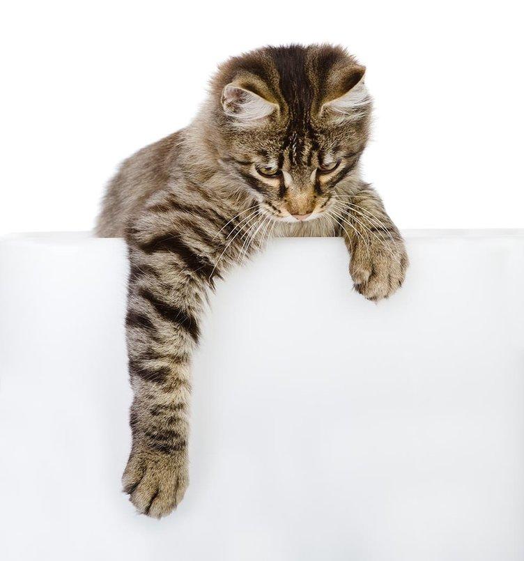 Kediler sahibine göre miyavlıyormuş!