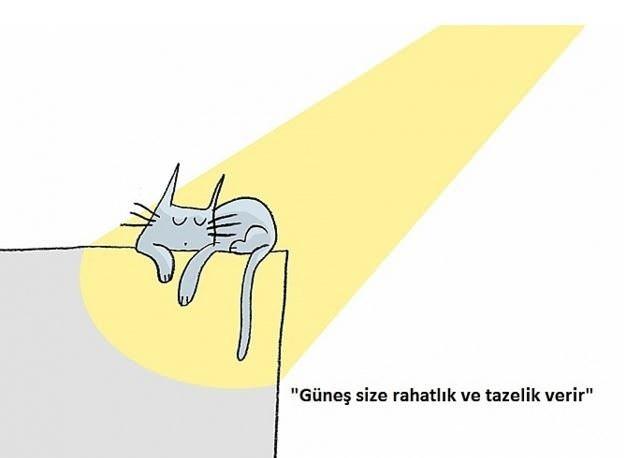 Yalnızca kedilerin size öğretebileceği, altın değerinde 16 hayat dersi