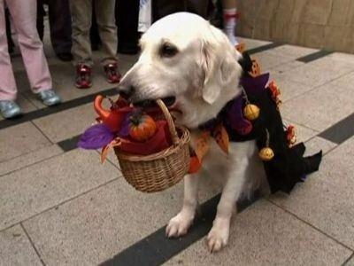 Hayvanlar cadılar bayramını kutlarsa