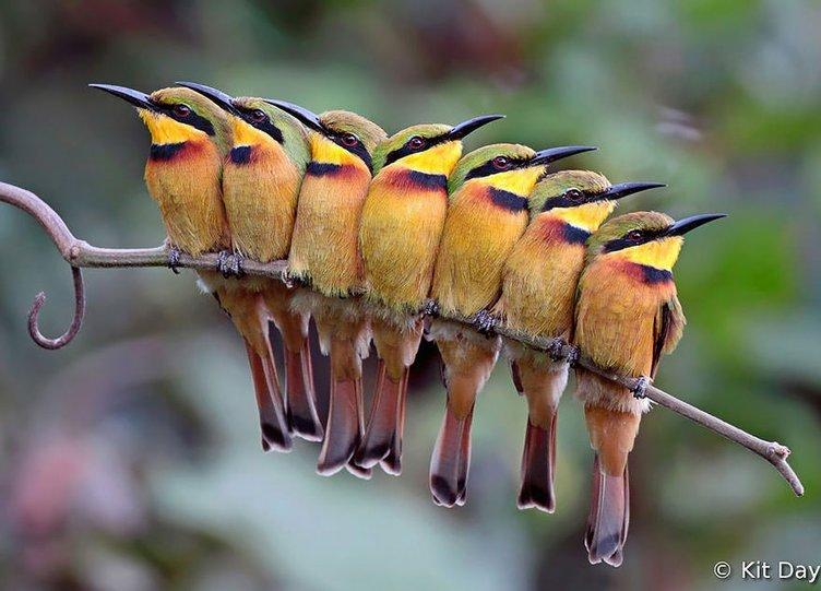 Isınmak için birlikte uyuyan kuşlar