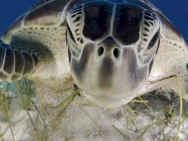 2013'ün ödüllü doğal yaşam fotoğrafları