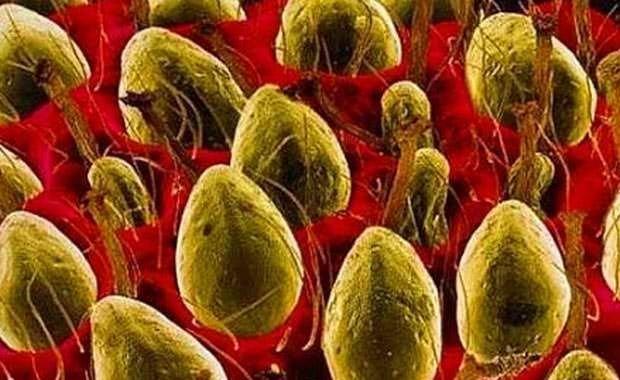 Mikroskopta harika görünen sıradan şeyler